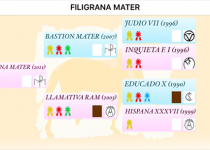 1 FILIGRANA MATER