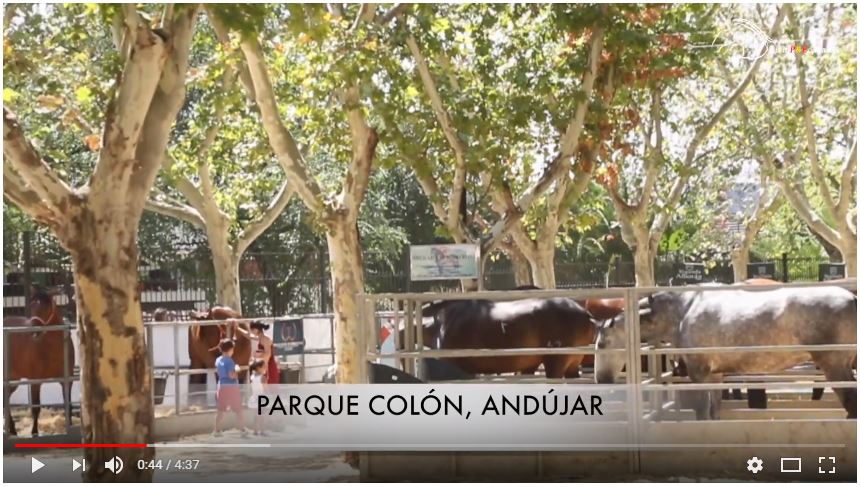 VIDEO REPORTAJE DE ANDUCAB 2017